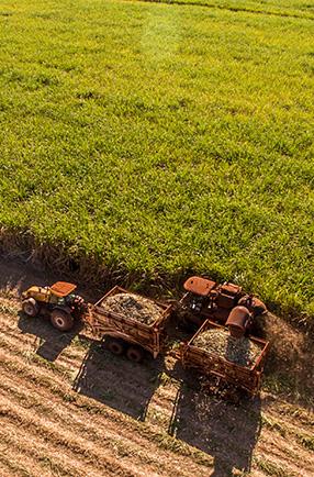 Criação de seguro personalizado para o agronegócio